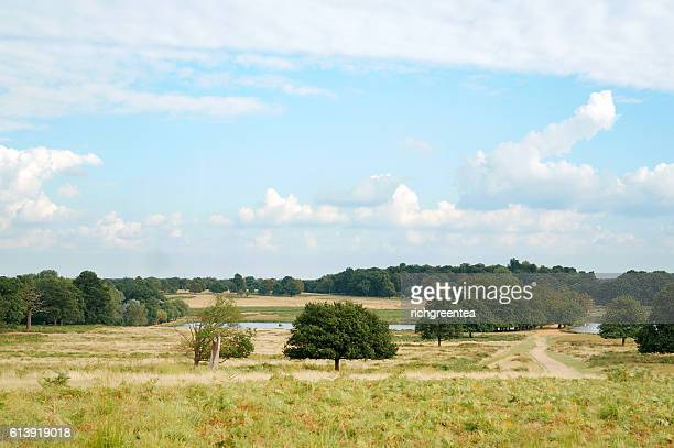 trees on field at richmond park against cloudy sky, richmond park, london, uk - richmond park stock pictures, royalty-free photos & images