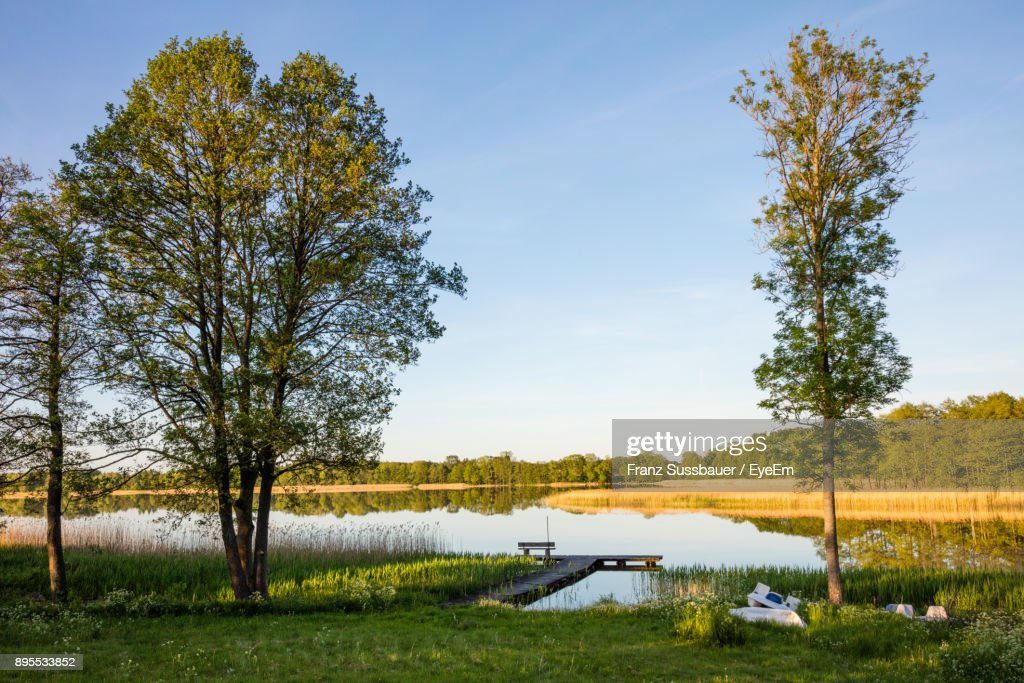 Trees On Field By Lake Against Sky : Stock Photo