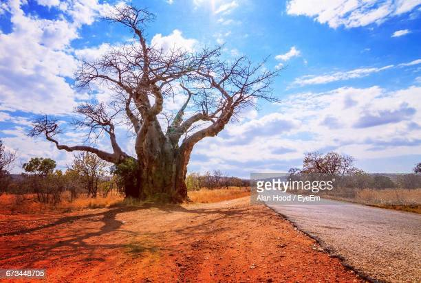 trees on field by road against sky - zimbabwe fotografías e imágenes de stock