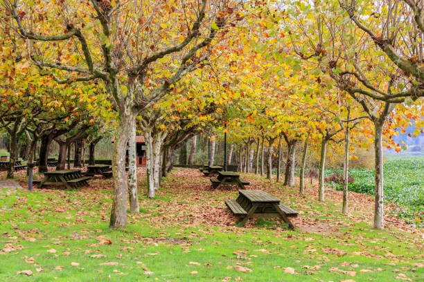 Trees On Field During Autumn, Oi, Portugal