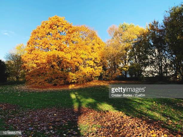 trees on field during autumn - bortes stockfoto's en -beelden