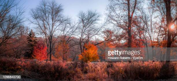trees on field during autumn - norristown stock pictures, royalty-free photos & images