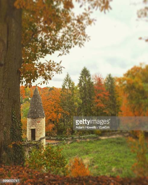 trees on field during autumn - oise stock pictures, royalty-free photos & images