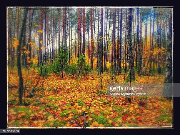 trees on field in forest during autumn - transferbild stock-fotos und bilder