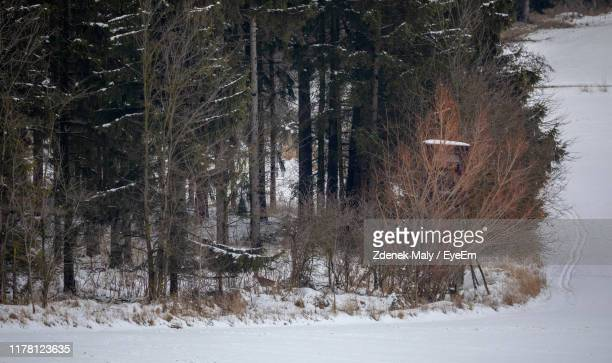 trees on field in forest during winter - czech hunters stock-fotos und bilder