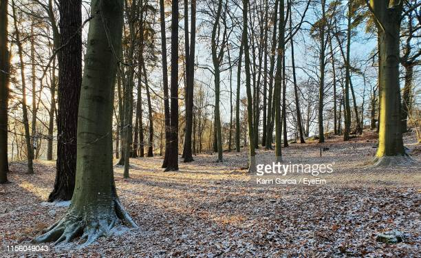 trees on field in forest - karin garcia eyeem stock pictures, royalty-free photos & images