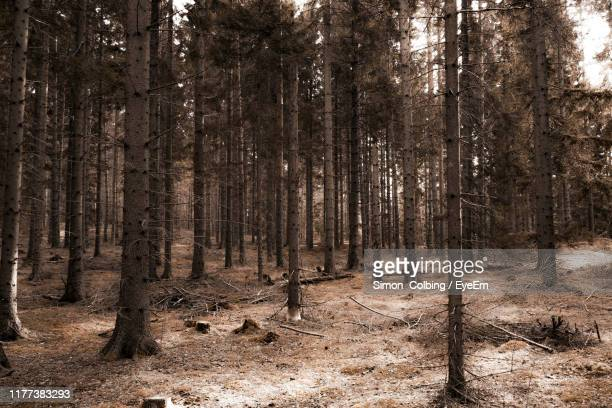 trees on field in forest - colbing stock pictures, royalty-free photos & images