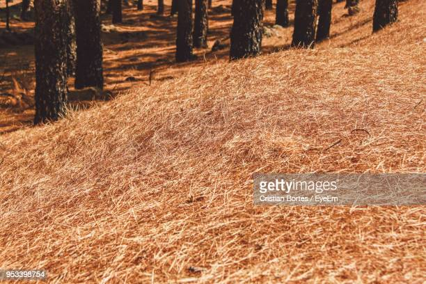 trees on field in forest - bortes cristian stock photos and pictures