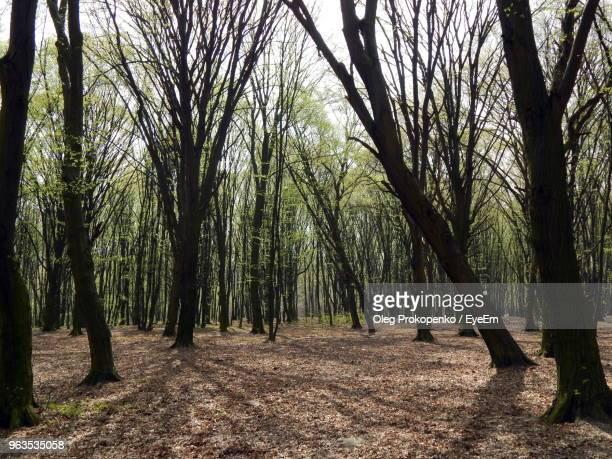 trees on field in forest - oleg prokopenko stock pictures, royalty-free photos & images