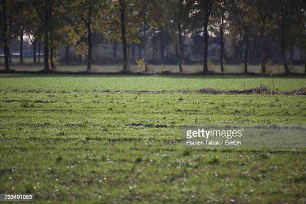 trees on field - paulien tabak stock pictures, royalty-free photos & images