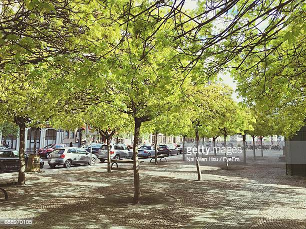 Trees On Footpath In City