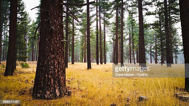 trees on grass area in forest - steve matten stock pictures, royalty-free photos & images
