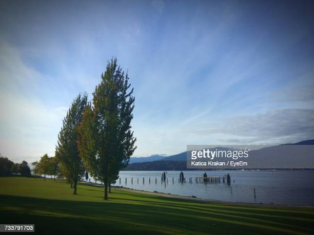 Trees On Grass By Lake Against Blue Sky