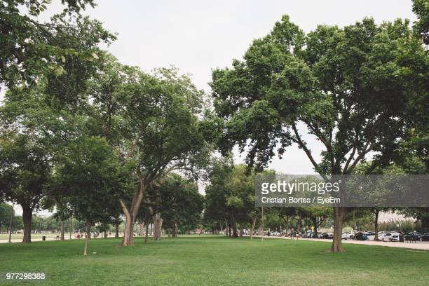 Trees On Grass On Field Against Sky