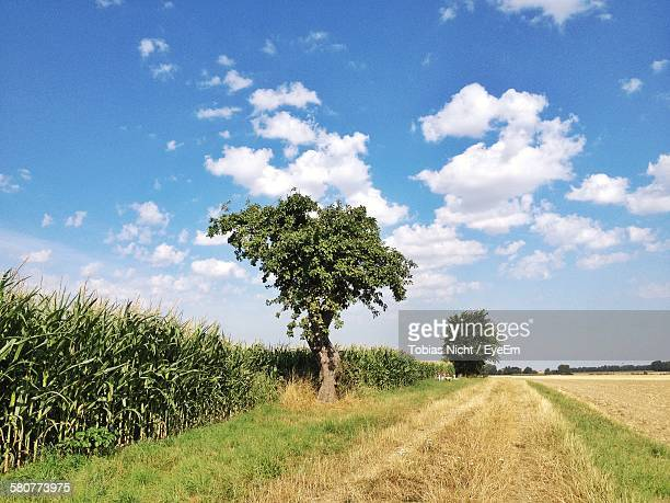 Trees On Grassy Field Against Cloudy Blue Sky