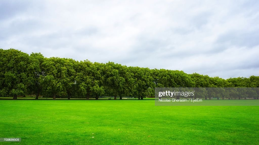Trees On Grassy Field Against Cloudy Sky : Stock Photo