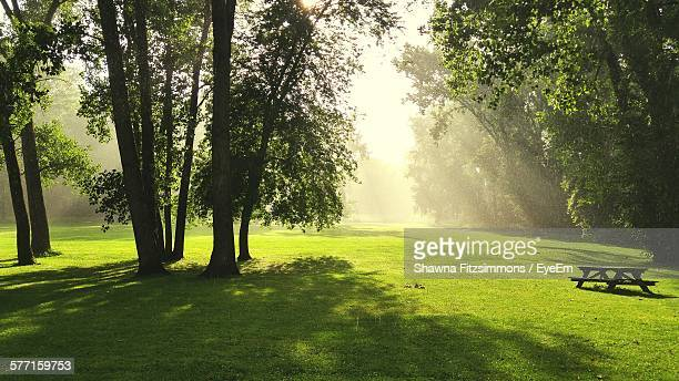 trees on grassy field at park - lush stock pictures, royalty-free photos & images