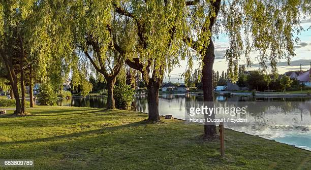 Trees On Grassy Field By Lake