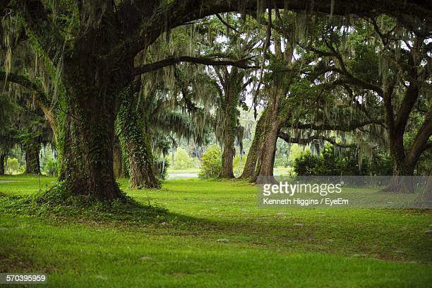 trees on grassy field in forest - tallahassee stock pictures, royalty-free photos & images