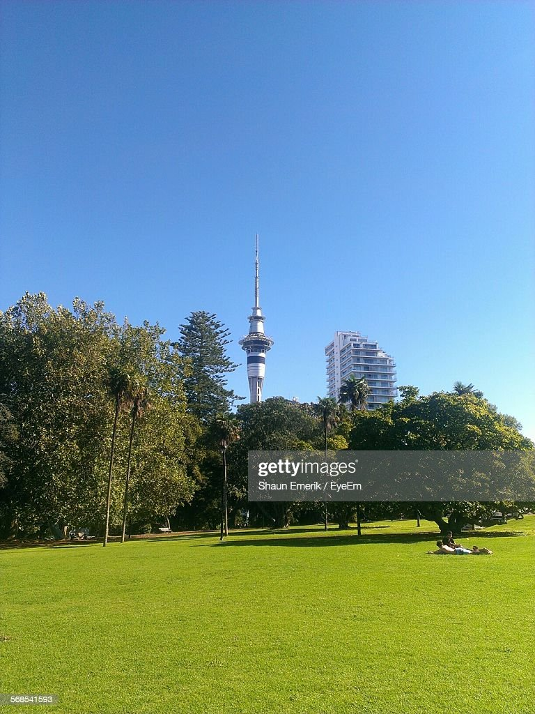 Trees On Grassy Field In Park Against Sky Tower : ストックフォト