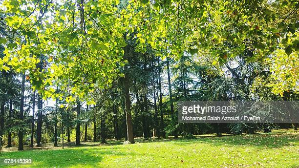 trees on grassy field - salah stock photos and pictures