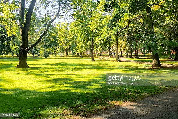 trees on grassy landscape in park - public park stock photos and pictures