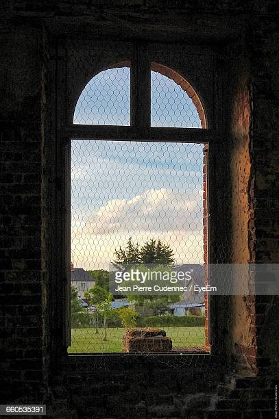 Trees On Grassy Landscape Seen Through Window