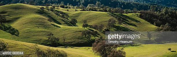 trees on hills - timothy hearsum stock pictures, royalty-free photos & images