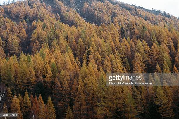 trees on hillside with autumnal foliage - isabelle foret photos et images de collection