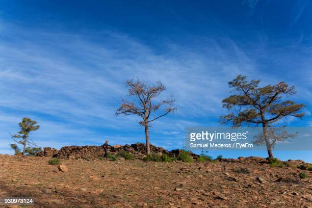 Trees On Landscape Against Blue Sky