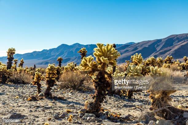trees on landscape against clear blue sky - indio california stock photos and pictures