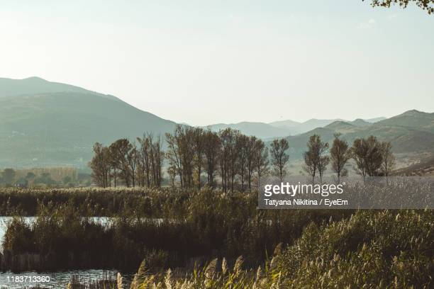 trees on landscape against clear sky - nikitina stock pictures, royalty-free photos & images