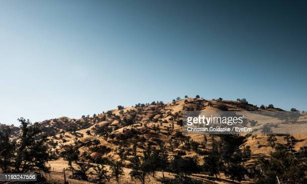 trees on landscape against clear sky - christian soldatke stock pictures, royalty-free photos & images
