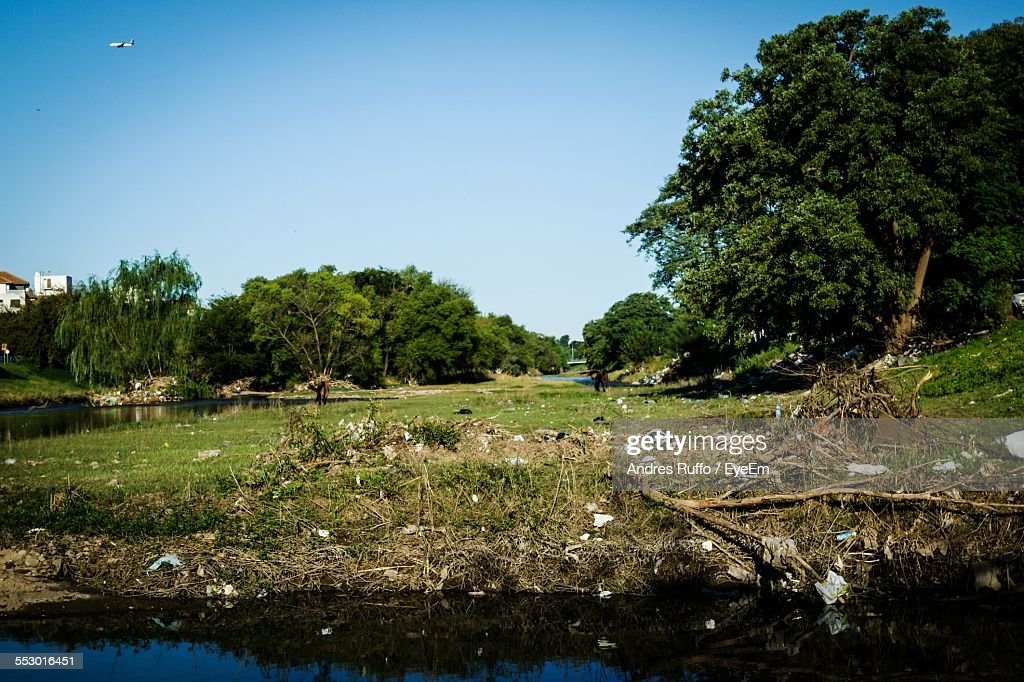 Trees On Landscape Against Clear Sky : Stock Photo