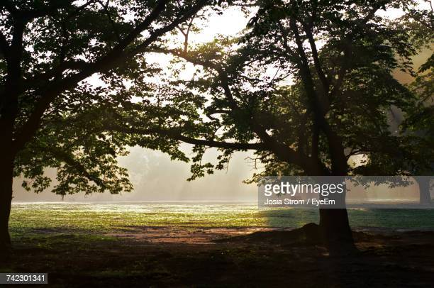 trees on landscape against sea - yoyogi tokyo stock photos and pictures