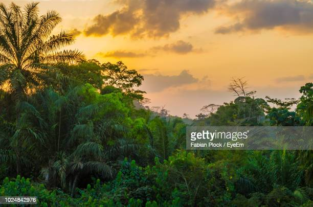 trees on landscape against sky at sunset - liberia stock pictures, royalty-free photos & images