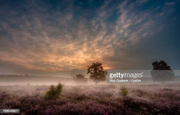 trees on landscape against sky at sunset - hilversum foto e immagini stock