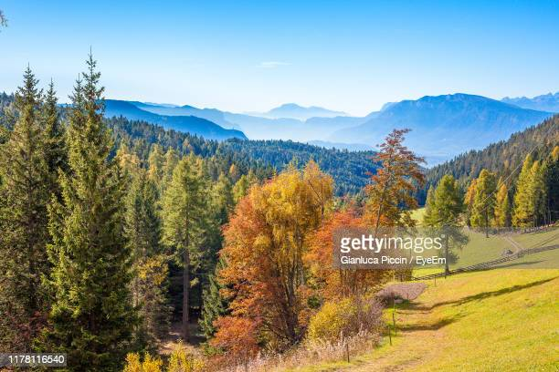 trees on landscape against sky during autumn - larch tree stock pictures, royalty-free photos & images