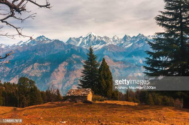 trees on landscape against sky during autumn,munsyari,uttarakhand,india - images stock pictures, royalty-free photos & images