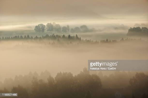 trees on landscape against sky during foggy weather - ver a hora stockfoto's en -beelden