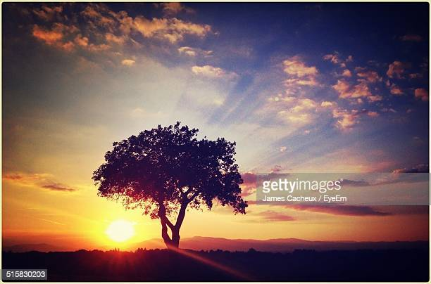 trees on landscape against sky during sunset - ミュールーズ ストックフォトと画像