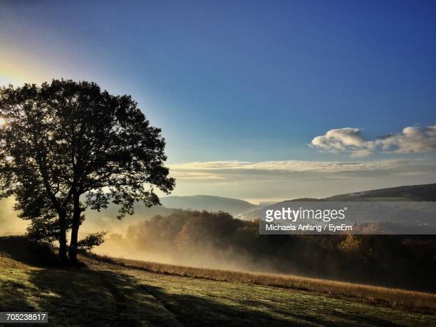 trees on landscape against sky during sunset - anfang stock pictures, royalty-free photos & images