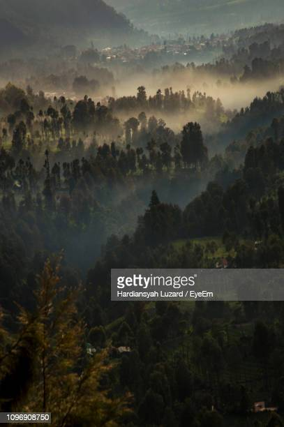trees on landscape against sky - east java province stock pictures, royalty-free photos & images