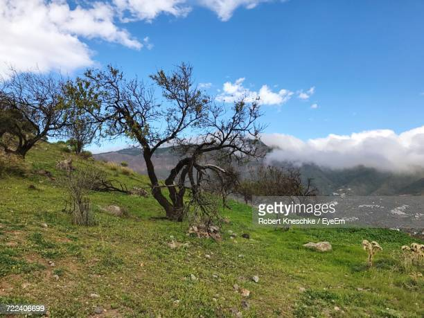 trees on landscape against sky - tejeda canary islands stock pictures, royalty-free photos & images