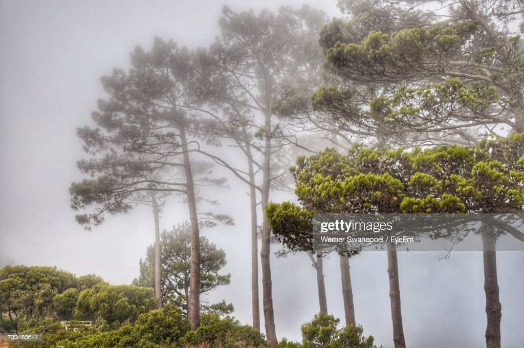 Trees On Landscape Against Sky : Stock Photo