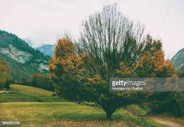 trees on landscape against sky - ksi stock photos and pictures
