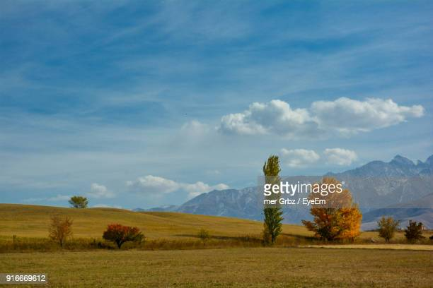 trees on landscape against sky - kyrgyzstan stock pictures, royalty-free photos & images