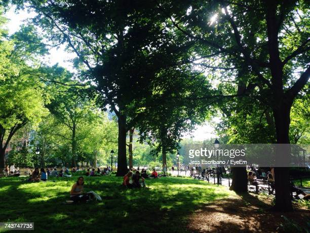 trees on landscape - washington square park stock pictures, royalty-free photos & images