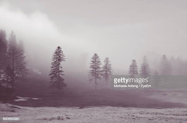 trees on landscape - anfang stock pictures, royalty-free photos & images