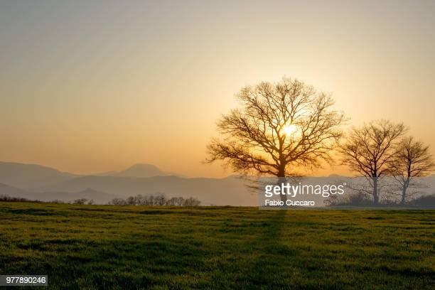 trees on meadow at sunset, molise, italy - molise foto e immagini stock